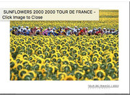 TDF 2000 Sunflowers Poster
